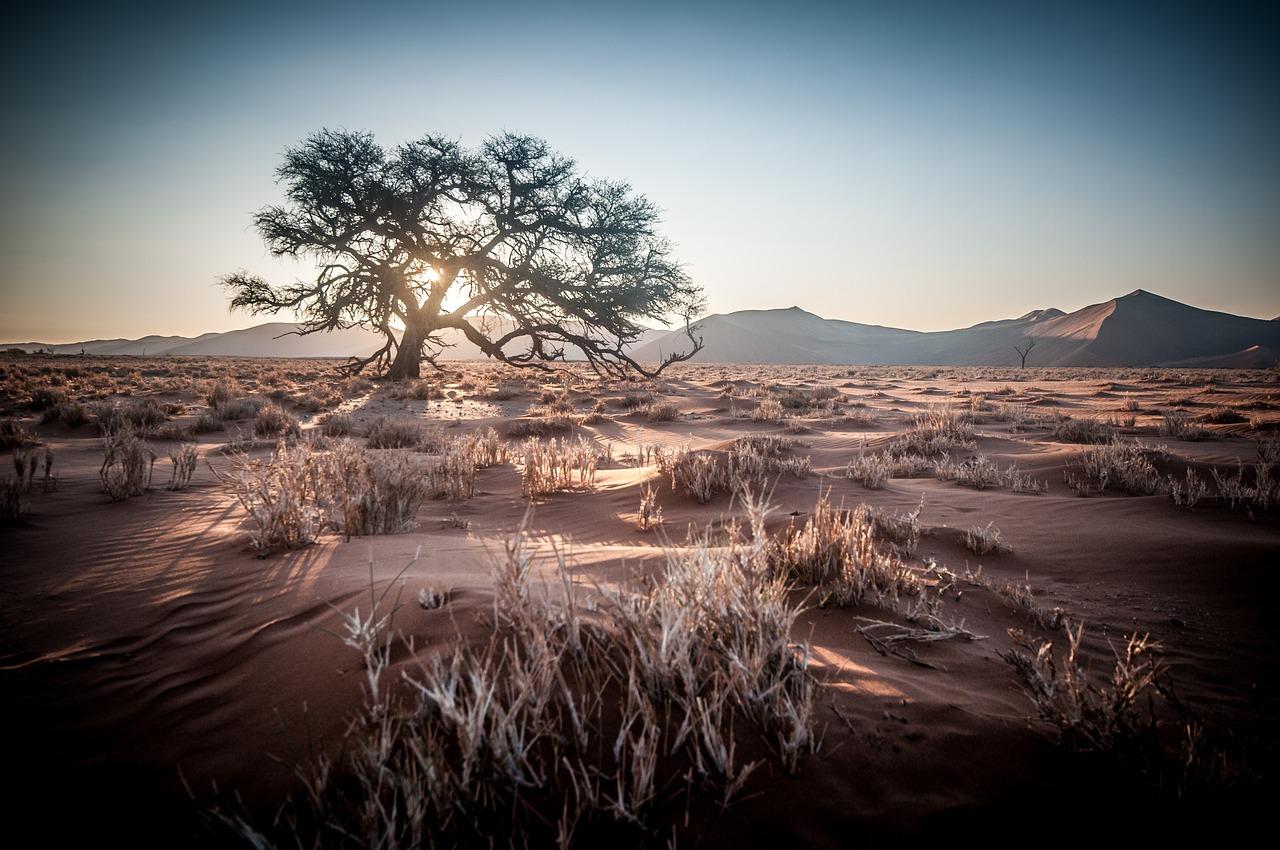 Un séjour à la carte en Namibie, une aubaine pour les safaristes